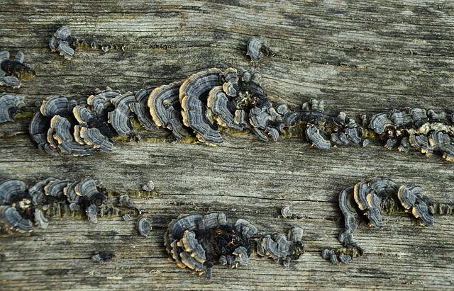 staré dřevo a houby